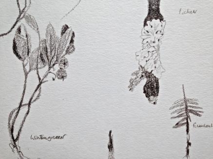 Wintergreen, Lichen, Hemlock