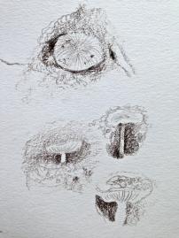 Mini Mushrooms, Steven's Glen